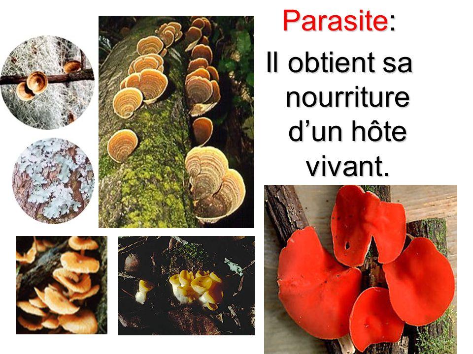 Saprophyte: Il obtient sa nourriture des matières non- vivantes organique.
