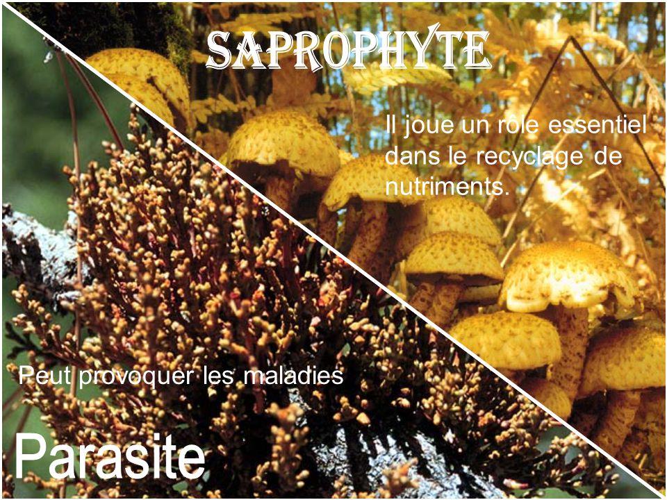 Il joue un rôle essentiel dans le recyclage de nutriments. Peut provoquer les maladies
