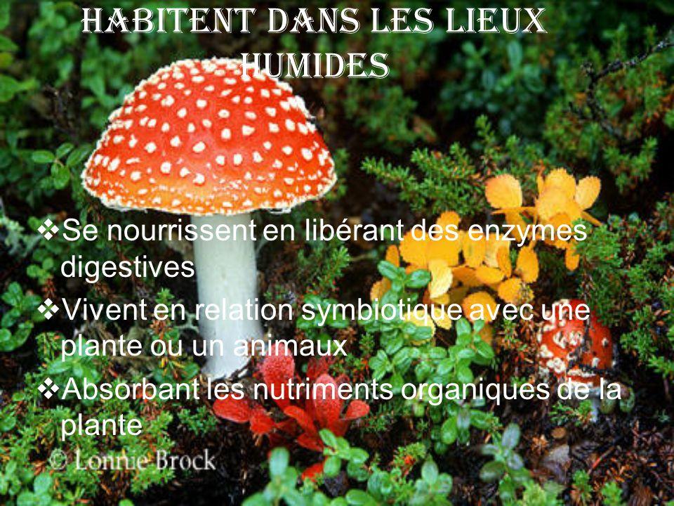 Habitent dans Les Lieux Humides Se nourrissent en libérant des enzymes digestives Vivent en relation symbiotique avec une plante ou un animaux Absorba