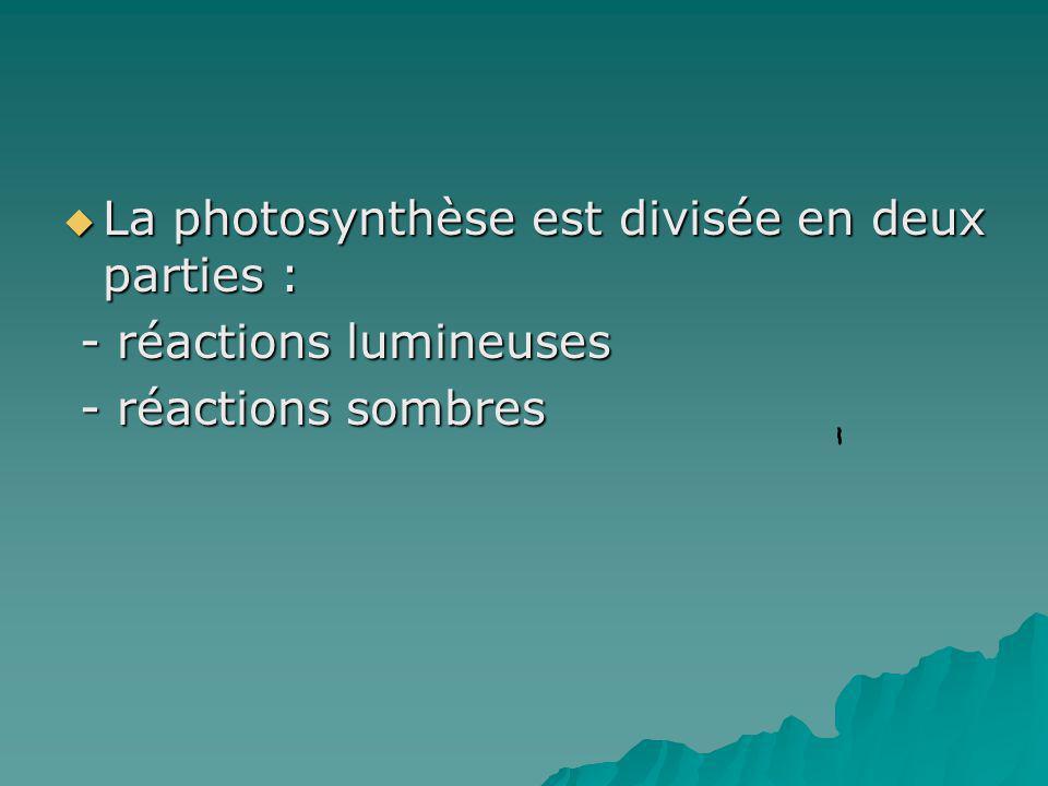 La photosynthèse est divisée en deux parties : La photosynthèse est divisée en deux parties : - réactions lumineuses - réactions lumineuses - réaction