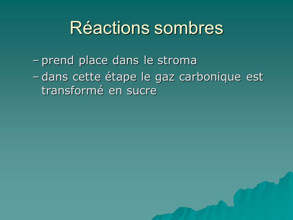 Réactions sombres –prend place dans le stroma –dans cette étape le gaz carbonique est transformé en sucre