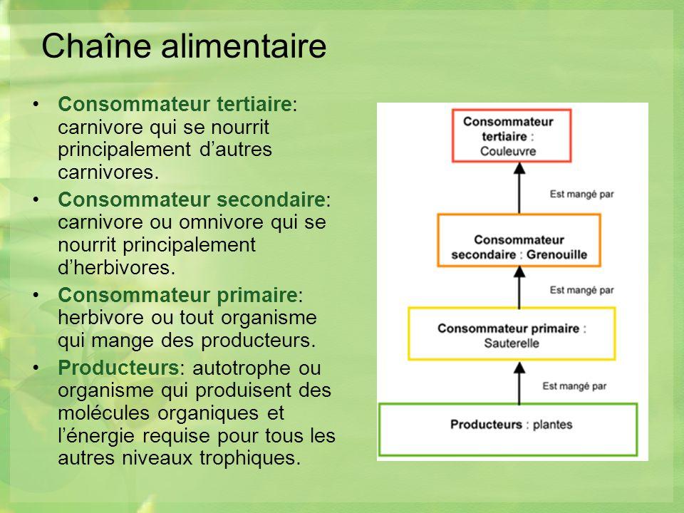 Chaîne alimentaire Consommateur tertiaire: carnivore qui se nourrit principalement dautres carnivores.