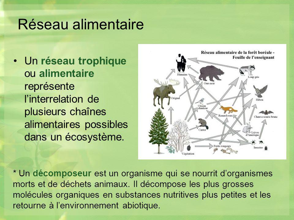 Réseau alimentaire Un réseau trophique ou alimentaire représente linterrelation de plusieurs chaînes alimentaires possibles dans un écosystème.