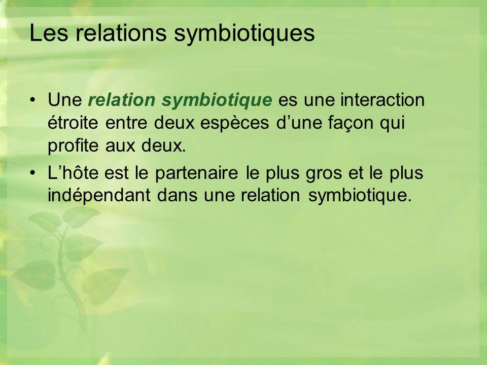 Les relations symbiotiques Une relation symbiotique es une interaction étroite entre deux espèces dune façon qui profite aux deux.