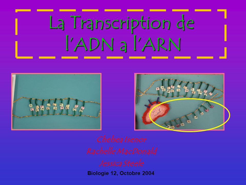 Table de Matiere La Transcription est un processus (qui arrive dans les ribosomes dun cellule) qui produit un copie exacte dun gene dun organisme Etape #1 Initiation, ou on trouve la meilleur endroit sur le molecule dADN pour commencer de copier linformation Etape #2 Puis dans letape dElongation on commence a copier le bon nombre des nucleotides trouve sur lADN a la molecule de lARNm Etape #3 La Terminasion signal la place ou on arrete a copie tous linformation que lARNm a besoin de pour le gene quil copier.
