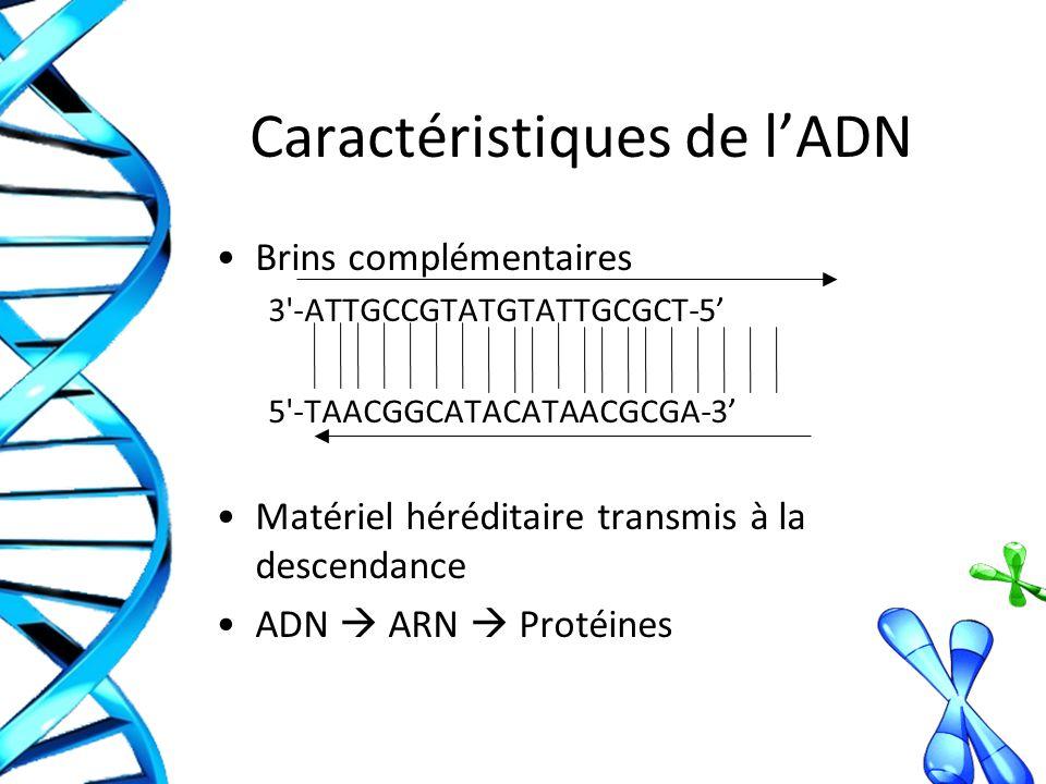 Caractéristiques de lADN Brins complémentaires 3 -ATTGCCGTATGTATTGCGCT-5 5 -TAACGGCATACATAACGCGA-3 Matériel héréditaire transmis à la descendance ADN ARN Protéines