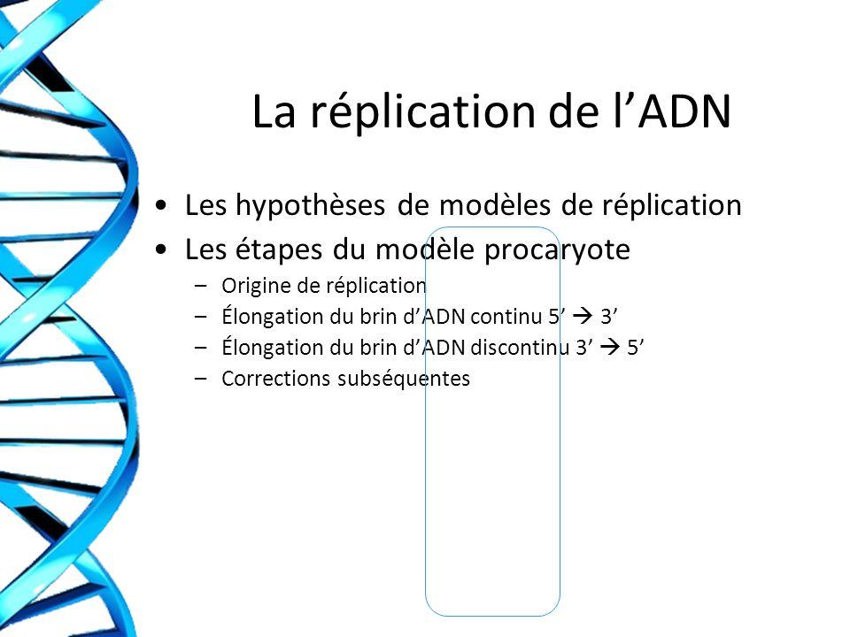 Applications - Réflexions Quelles sont les conséquences des erreurs de réplication au niveau du génome .