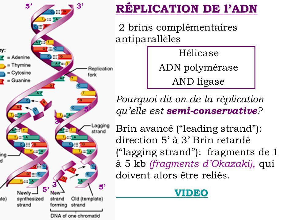 RÉPLICATION DE lADN 2 brins complémentaires antiparallèles Hélicase ADN polymérase AND ligase Pourquoi dit-on de la réplication quelle est semi-conser