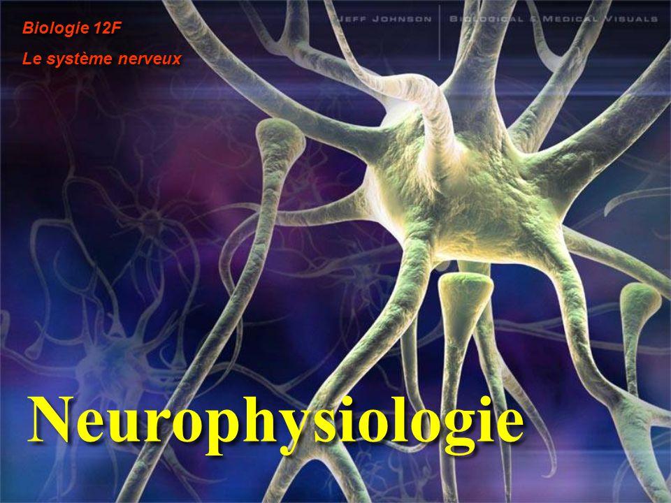 Neurophysiologie Biologie 12F Le système nerveux Biologie 12F Le système nerveux