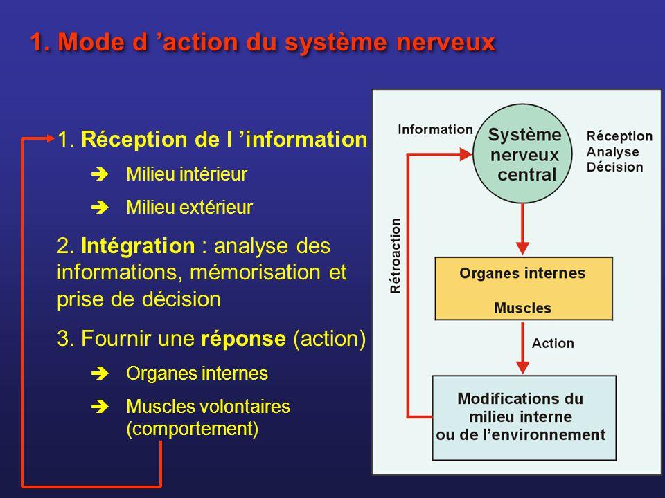 1. Mode d action du système nerveux 1. Réception de l information Milieu intérieur Milieu extérieur 2. Intégration : analyse des informations, mémoris