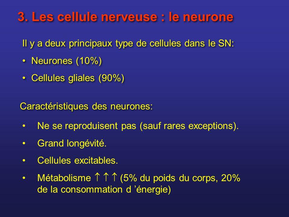 3. Les cellule nerveuse : le neurone Il y a deux principaux type de cellules dans le SN: Neurones (10%) Cellules gliales (90%) Il y a deux principaux