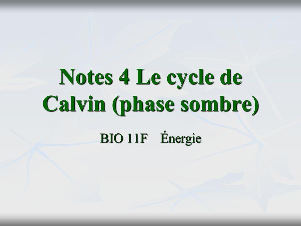 Notes 4 Le cycle de Calvin (phase sombre) BIO 11FÉnergie