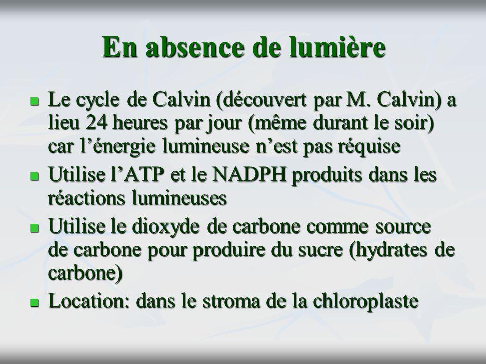En absence de lumière Le cycle de Calvin (découvert par M. Calvin) a lieu 24 heures par jour (même durant le soir) car lénergie lumineuse nest pas réq