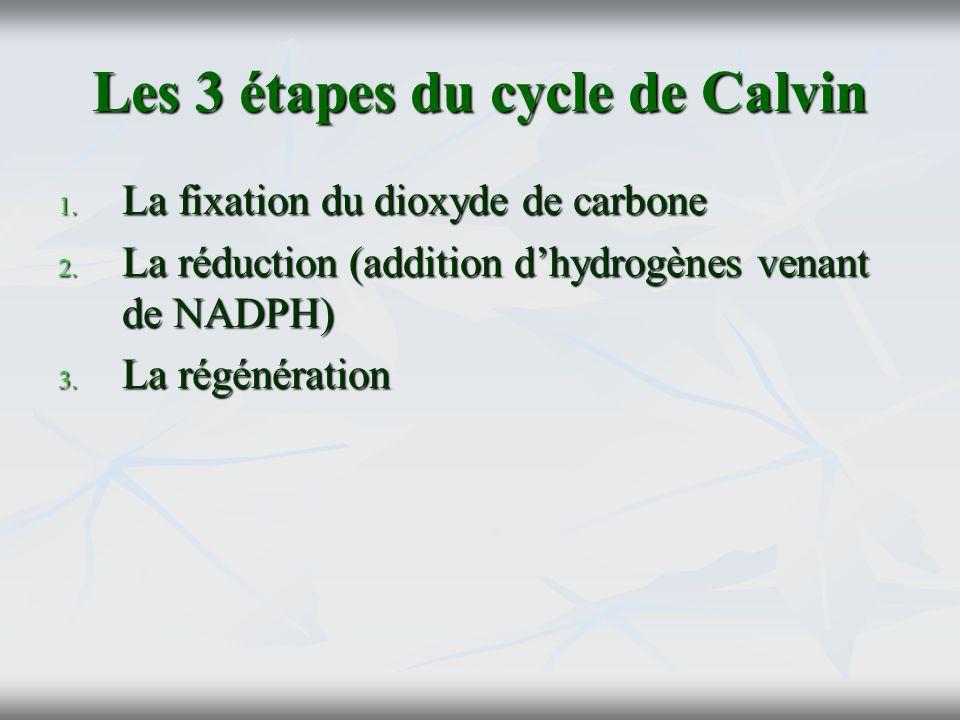 Les 3 étapes du cycle de Calvin 1. La fixation du dioxyde de carbone 2. La réduction (addition dhydrogènes venant de NADPH) 3. La régénération