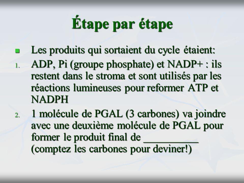 Étape par étape Les produits qui sortaient du cycle étaient: Les produits qui sortaient du cycle étaient: 1. ADP, Pi (groupe phosphate) et NADP+ : ils