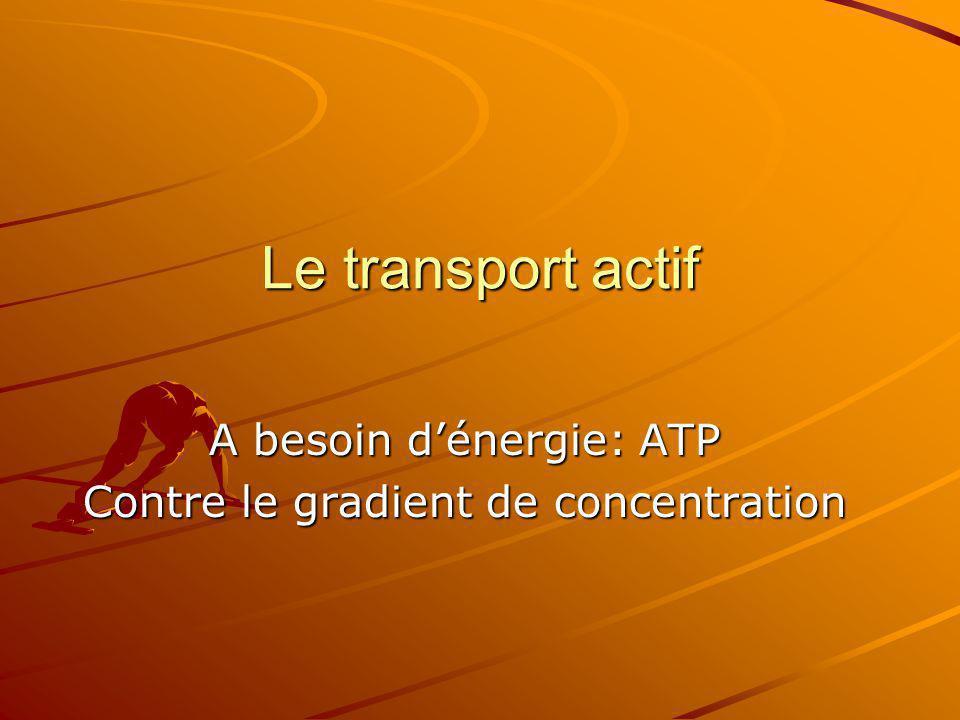 Le transport actif A besoin dénergie: ATP Contre le gradient de concentration