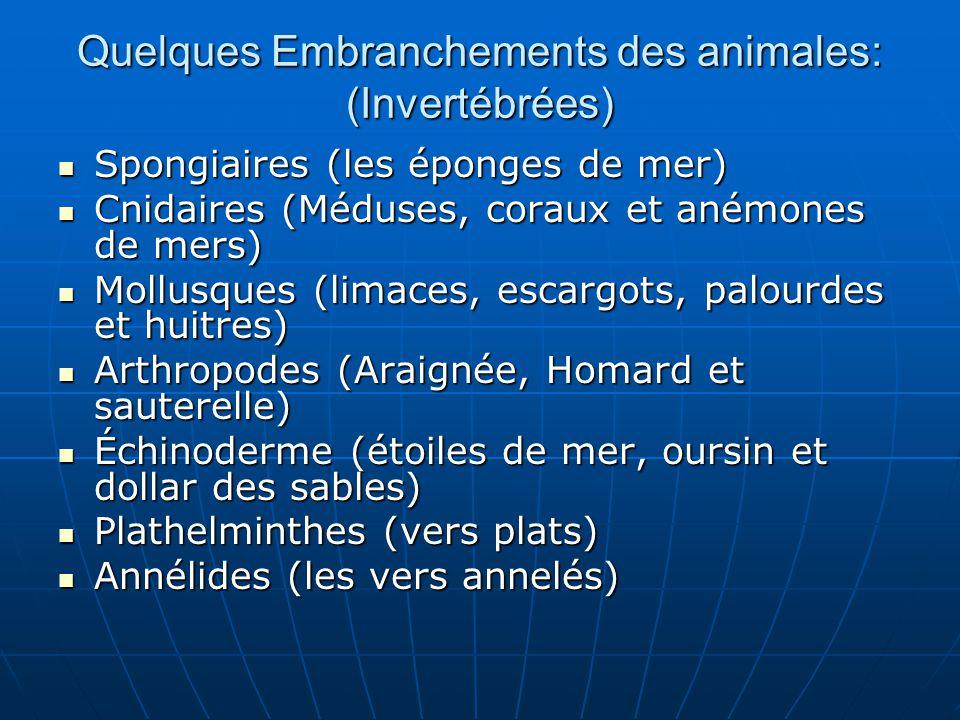 Quelques Embranchements des animales: (Invertébrées) Spongiaires (les éponges de mer) Spongiaires (les éponges de mer) Cnidaires (Méduses, coraux et anémones de mers) Cnidaires (Méduses, coraux et anémones de mers) Mollusques (limaces, escargots, palourdes et huitres) Mollusques (limaces, escargots, palourdes et huitres) Arthropodes (Araignée, Homard et sauterelle) Arthropodes (Araignée, Homard et sauterelle) Échinoderme (étoiles de mer, oursin et dollar des sables) Échinoderme (étoiles de mer, oursin et dollar des sables) Plathelminthes (vers plats) Plathelminthes (vers plats) Annélides (les vers annelés) Annélides (les vers annelés)