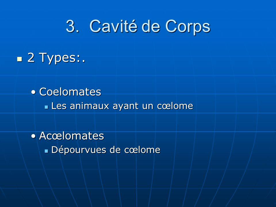 Coelomates: Coelomate : Se dit dun organisme qui possède un cœlome, comme les annélides, les mollusques, les arthropodes, les étoiles de mer et les cordés.