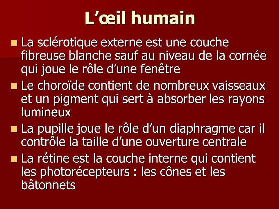 Lœil humain La sclérotique externe est une couche fibreuse blanche sauf au niveau de la cornée qui joue le rôle dune fenêtre La sclérotique externe es