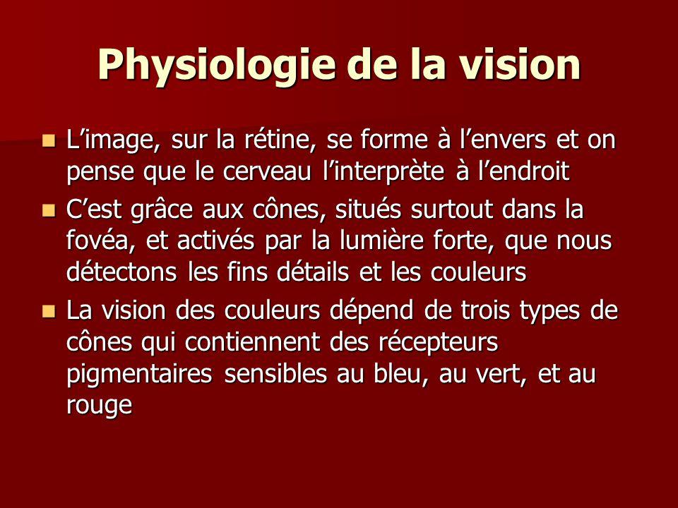 Physiologie de la vision Limage, sur la rétine, se forme à lenvers et on pense que le cerveau linterprète à lendroit Limage, sur la rétine, se forme à lenvers et on pense que le cerveau linterprète à lendroit Cest grâce aux cônes, situés surtout dans la fovéa, et activés par la lumière forte, que nous détectons les fins détails et les couleurs Cest grâce aux cônes, situés surtout dans la fovéa, et activés par la lumière forte, que nous détectons les fins détails et les couleurs La vision des couleurs dépend de trois types de cônes qui contiennent des récepteurs pigmentaires sensibles au bleu, au vert, et au rouge La vision des couleurs dépend de trois types de cônes qui contiennent des récepteurs pigmentaires sensibles au bleu, au vert, et au rouge