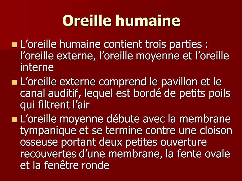 Oreille humaine Loreille humaine contient trois parties : loreille externe, loreille moyenne et loreille interne Loreille humaine contient trois parti