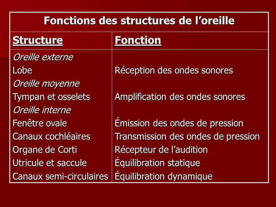 Fonctions des structures de loreille StructureFonction Oreille externe Lobe Oreille moyenne Tympan et osselets Oreille interne Fenêtre ovale Canaux co