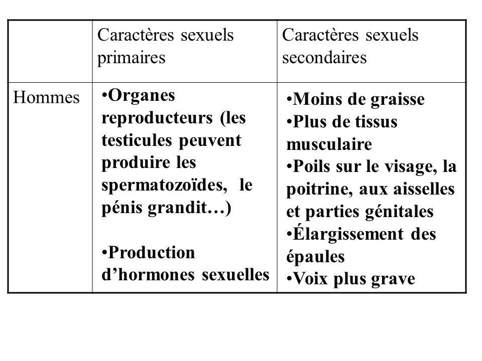 Caractères sexuels primaires Caractères sexuels secondaires Hommes Organes reproducteurs (les testicules peuvent produire les spermatozoïdes, le pénis