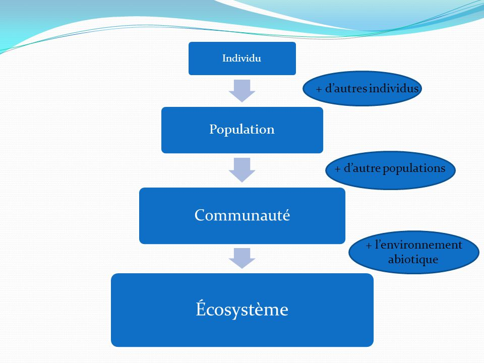 Individu Population Communauté Écosystème + dautre populations + lenvironnement abiotique + dautres individus