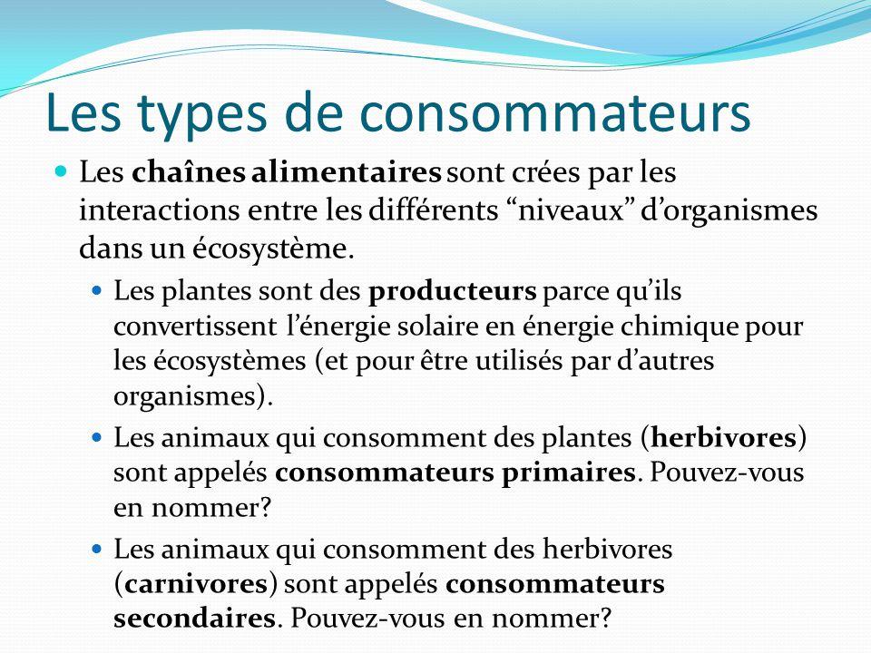Les types de consommateurs Les chaînes alimentaires sont crées par les interactions entre les différents niveaux dorganismes dans un écosystème. Les p