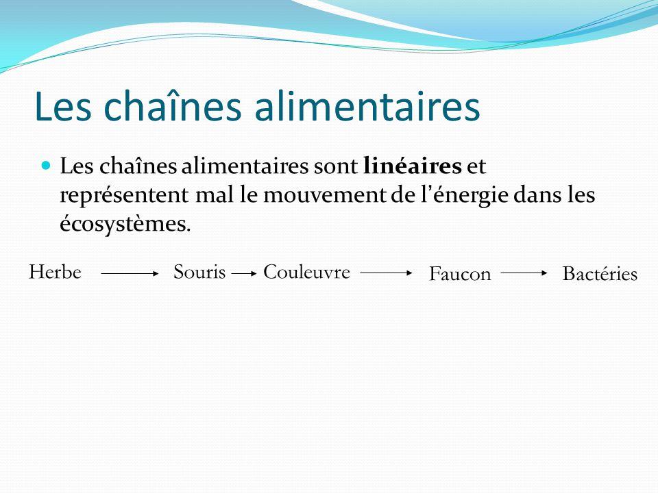 Les chaînes alimentaires Les chaînes alimentaires sont linéaires et représentent mal le mouvement de lénergie dans les écosystèmes. HerbeSourisCouleuv