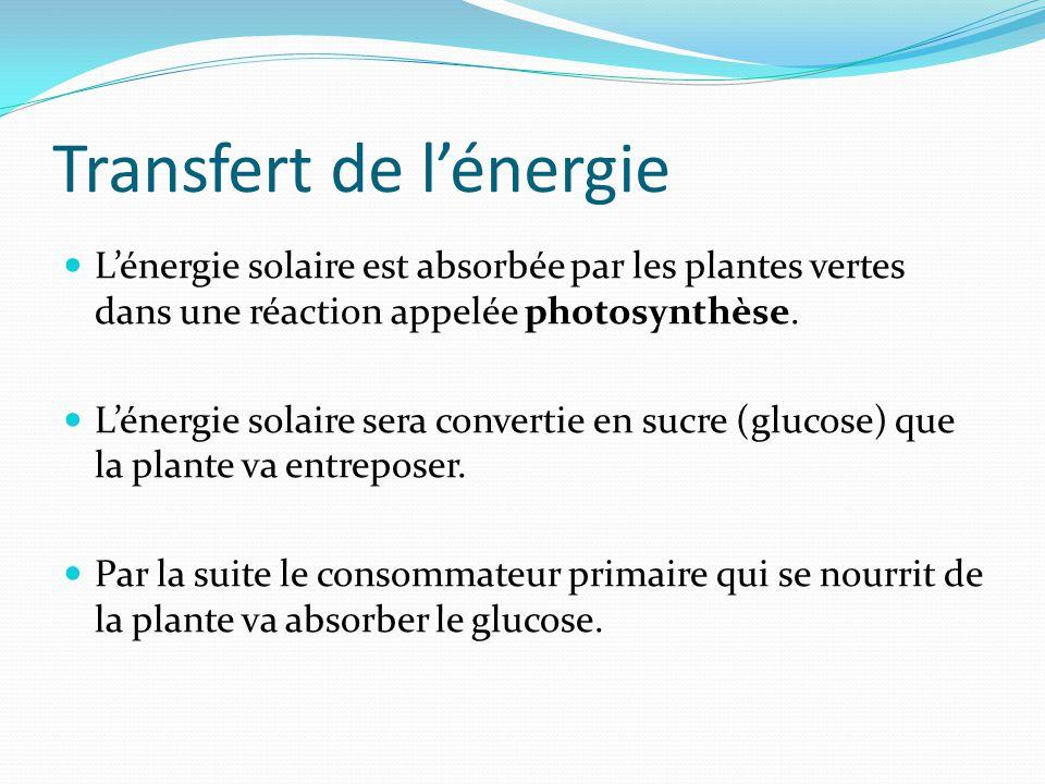 Transfert de lénergie Lénergie solaire est absorbée par les plantes vertes dans une réaction appelée photosynthèse. Lénergie solaire sera convertie en