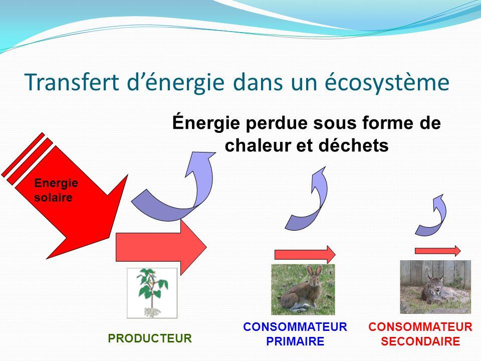 Transfert dénergie dans un écosystème Energie solaire Énergie perdue sous forme de chaleur et déchets PRODUCTEUR CONSOMMATEUR PRIMAIRE CONSOMMATEUR SE