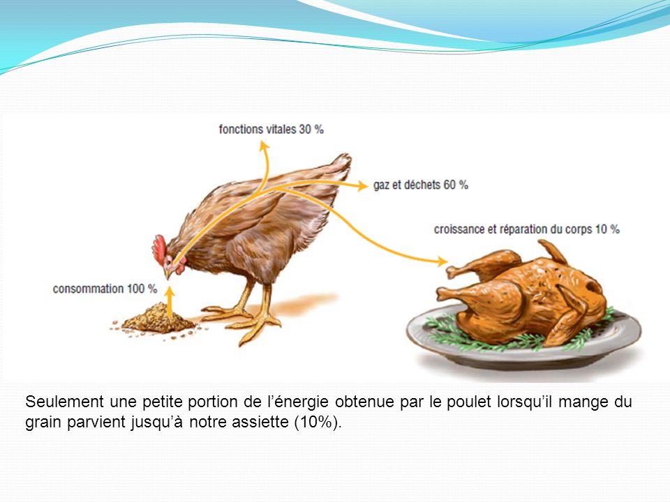 Seulement une petite portion de lénergie obtenue par le poulet lorsquil mange du grain parvient jusquà notre assiette (10%).