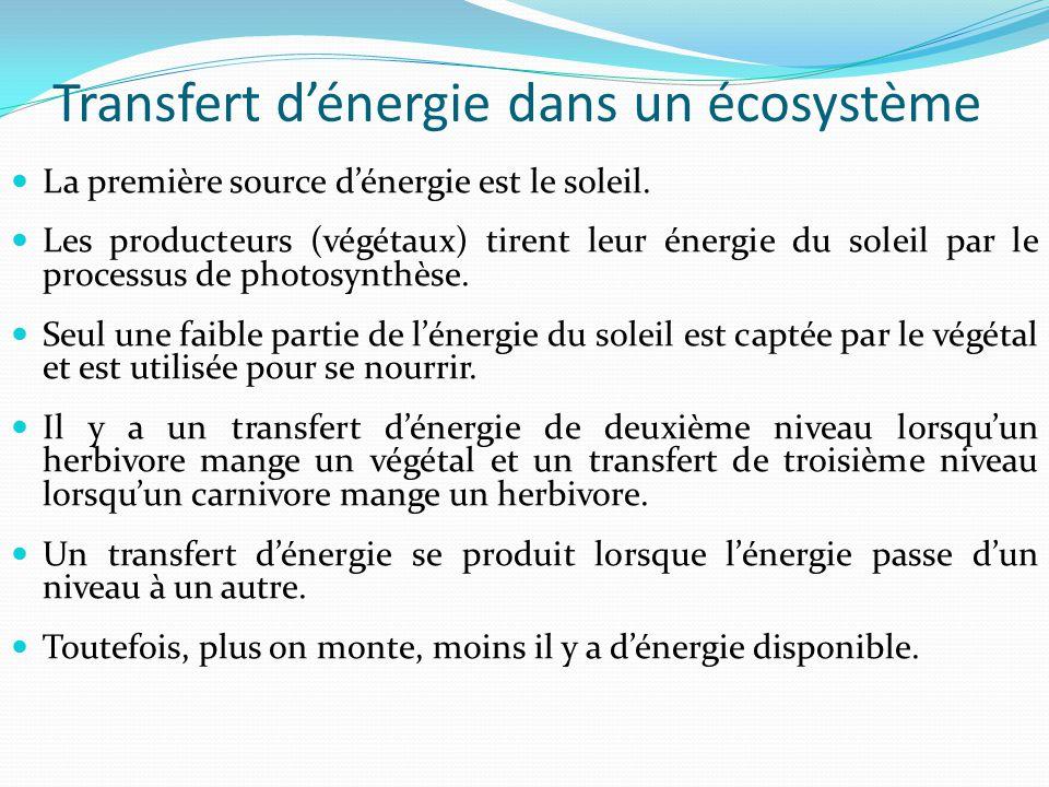 Transfert dénergie dans un écosystème La première source dénergie est le soleil. Les producteurs (végétaux) tirent leur énergie du soleil par le proce