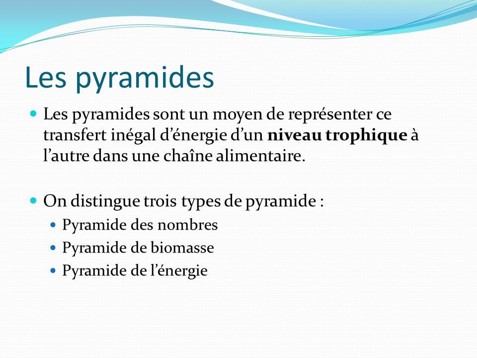 Les pyramides Les pyramides sont un moyen de représenter ce transfert inégal dénergie dun niveau trophique à lautre dans une chaîne alimentaire. On di