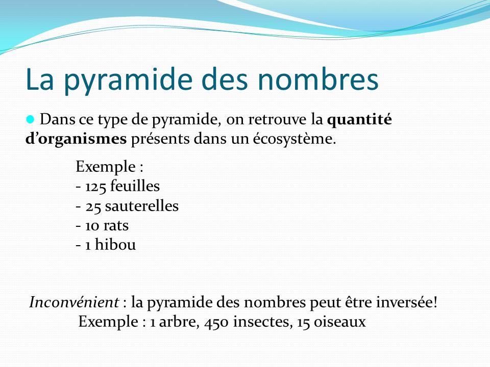 La pyramide des nombres Dans ce type de pyramide, on retrouve la quantité dorganismes présents dans un écosystème. Exemple : - 125 feuilles - 25 saute