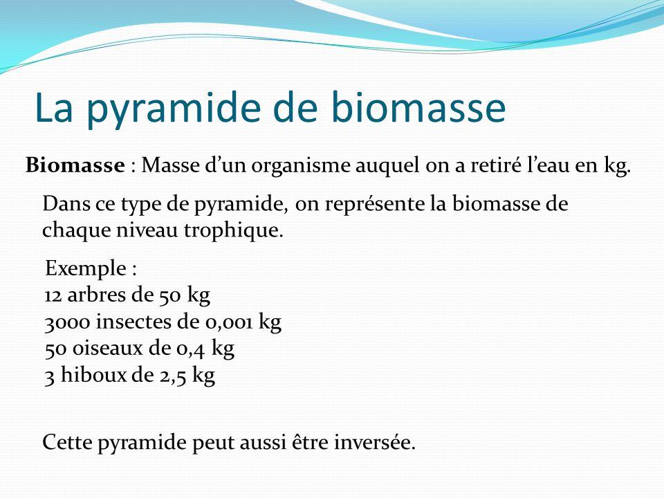 La pyramide de biomasse Biomasse : Masse dun organisme auquel on a retiré leau en kg. Dans ce type de pyramide, on représente la biomasse de chaque ni