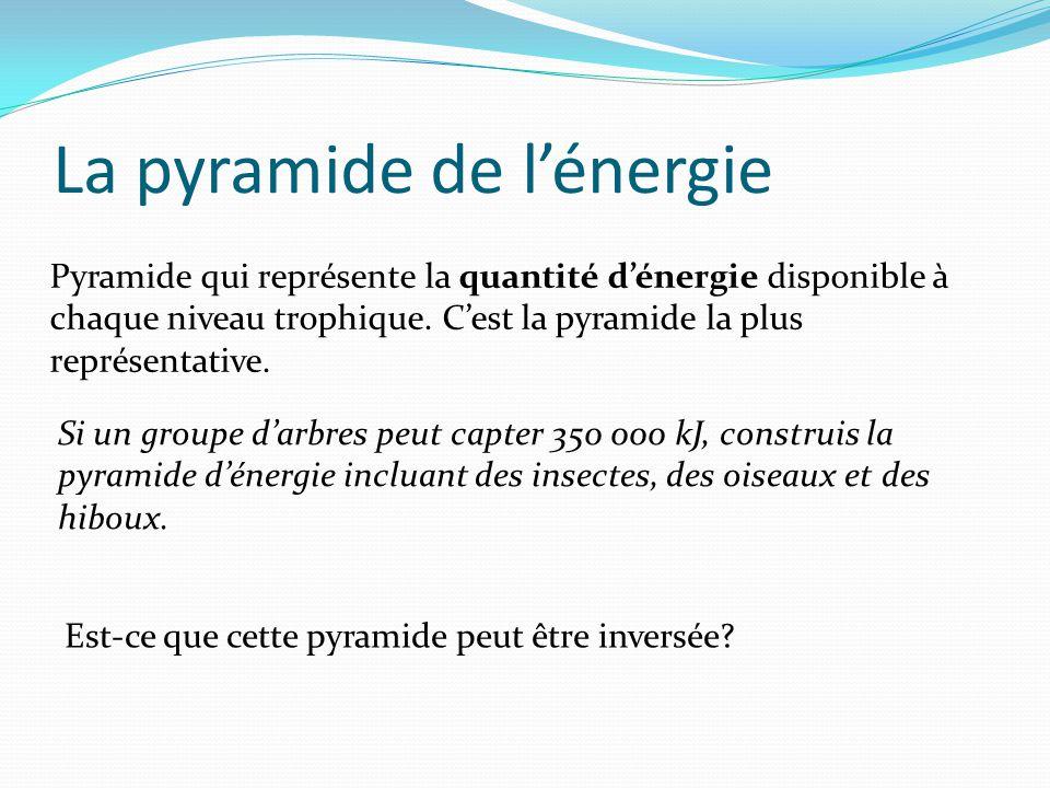 La pyramide de lénergie Pyramide qui représente la quantité dénergie disponible à chaque niveau trophique. Cest la pyramide la plus représentative. Si