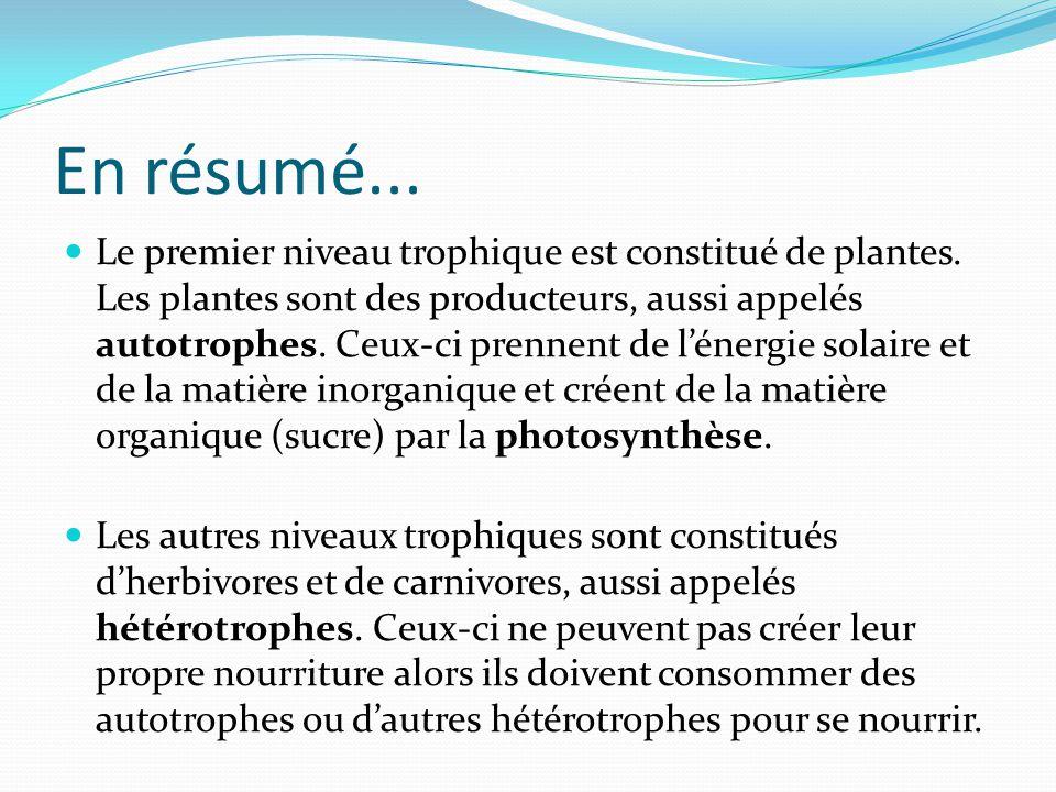 En résumé... Le premier niveau trophique est constitué de plantes. Les plantes sont des producteurs, aussi appelés autotrophes. Ceux-ci prennent de lé