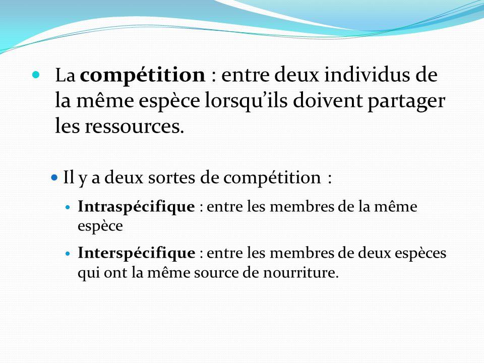 La compétition : entre deux individus de la même espèce lorsquils doivent partager les ressources. Il y a deux sortes de compétition : Intraspécifique
