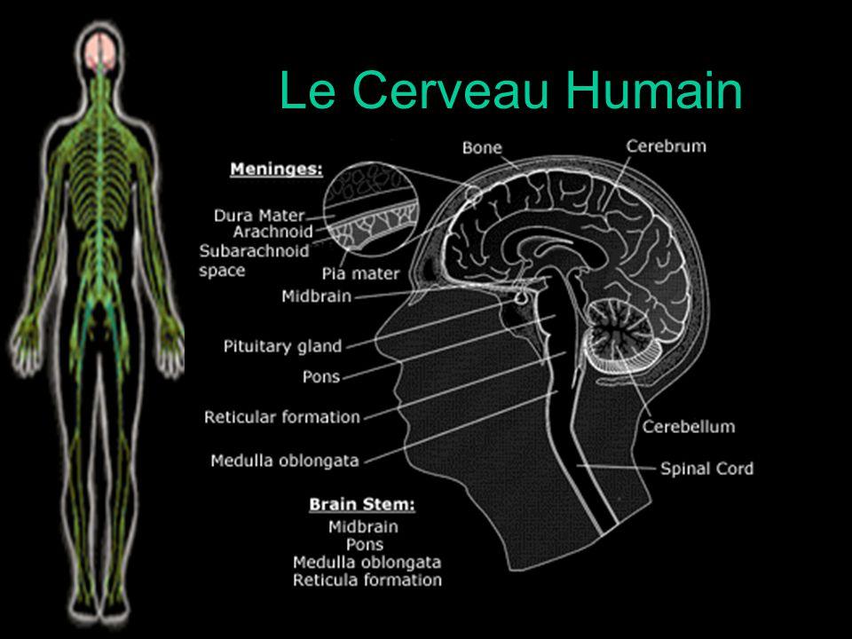 Les systèmes Nerveux Comparatifs