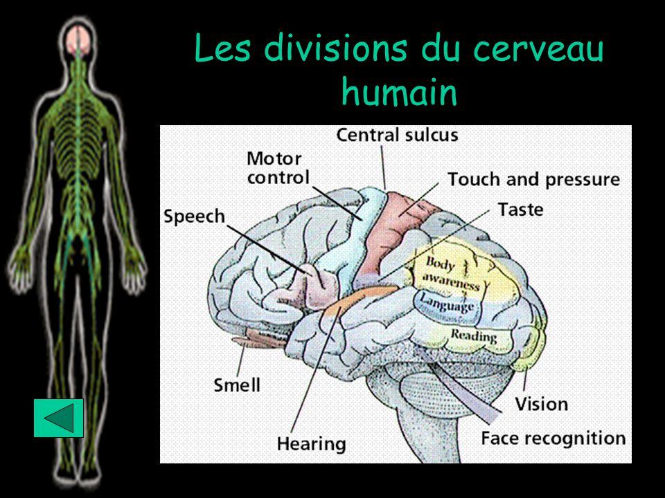 Les divisions du cerveau humain Continue with show
