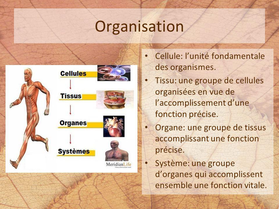 Organisation Cellule: lunité fondamentale des organismes. Tissu: une groupe de cellules organisées en vue de laccomplissement dune fonction précise. O