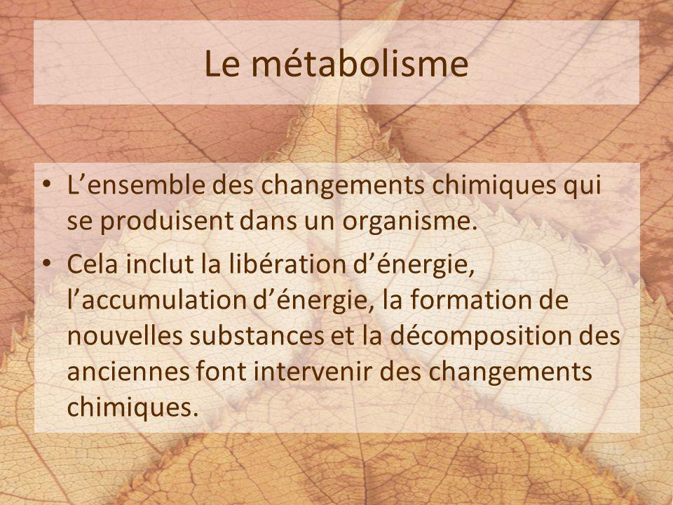 Le métabolisme Lensemble des changements chimiques qui se produisent dans un organisme. Cela inclut la libération dénergie, laccumulation dénergie, la