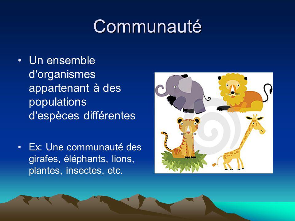 Communauté Un ensemble d organismes appartenant à des populations d espèces différentes Ex: Une communauté des girafes, éléphants, lions, plantes, insectes, etc.
