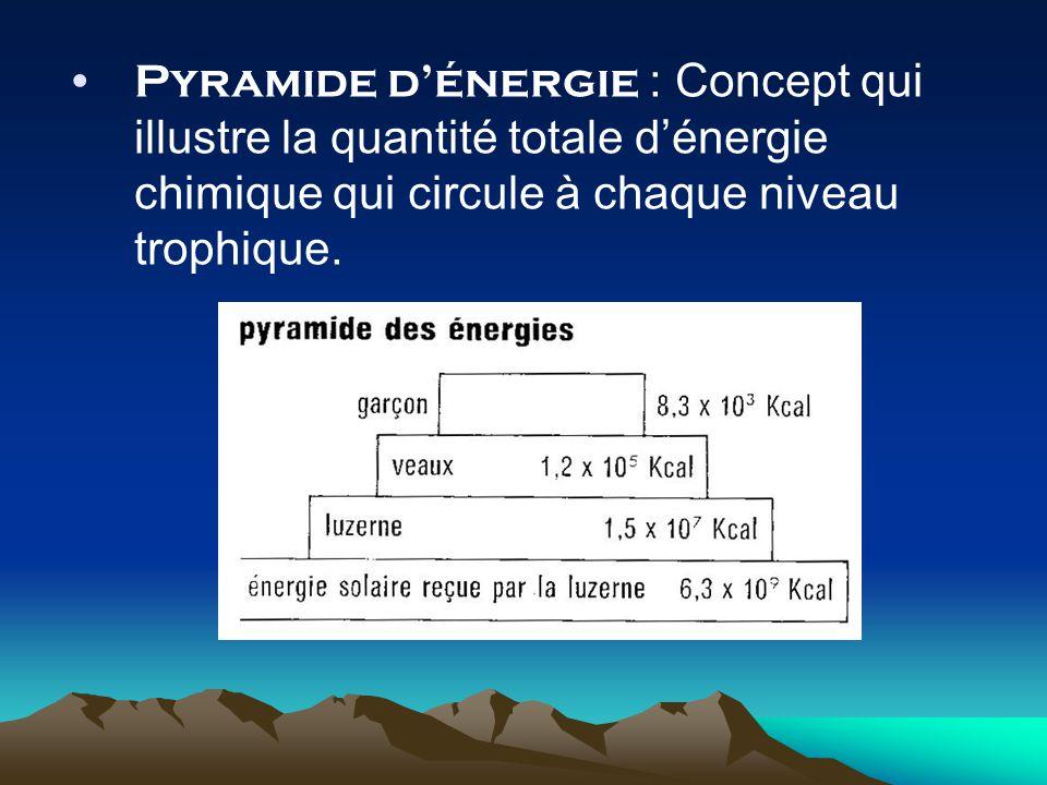 Pyramide dénergie : Concept qui illustre la quantité totale dénergie chimique qui circule à chaque niveau trophique.