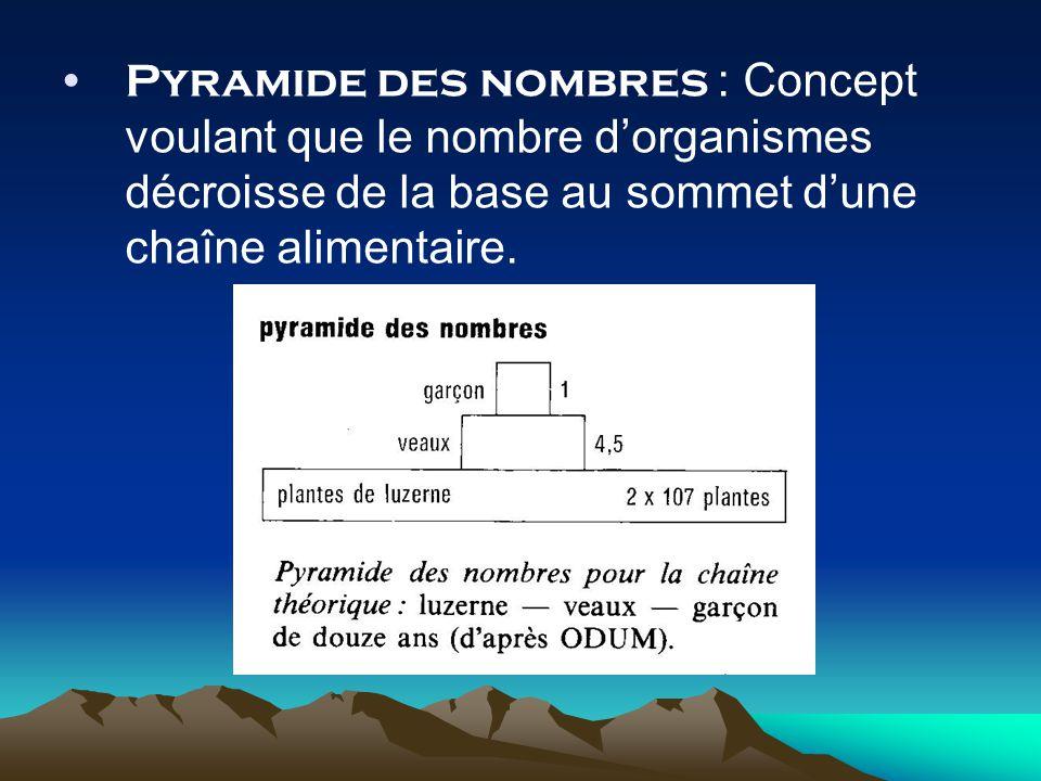 Pyramide des nombres : Concept voulant que le nombre dorganismes décroisse de la base au sommet dune chaîne alimentaire.