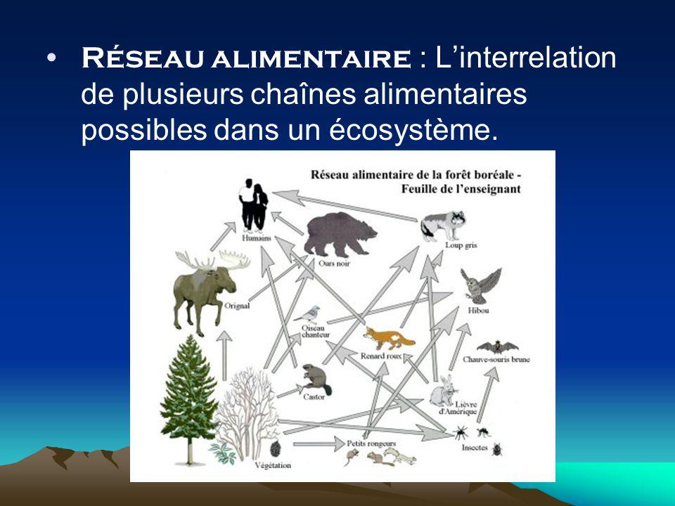 Réseau alimentaire : Linterrelation de plusieurs chaînes alimentaires possibles dans un écosystème.