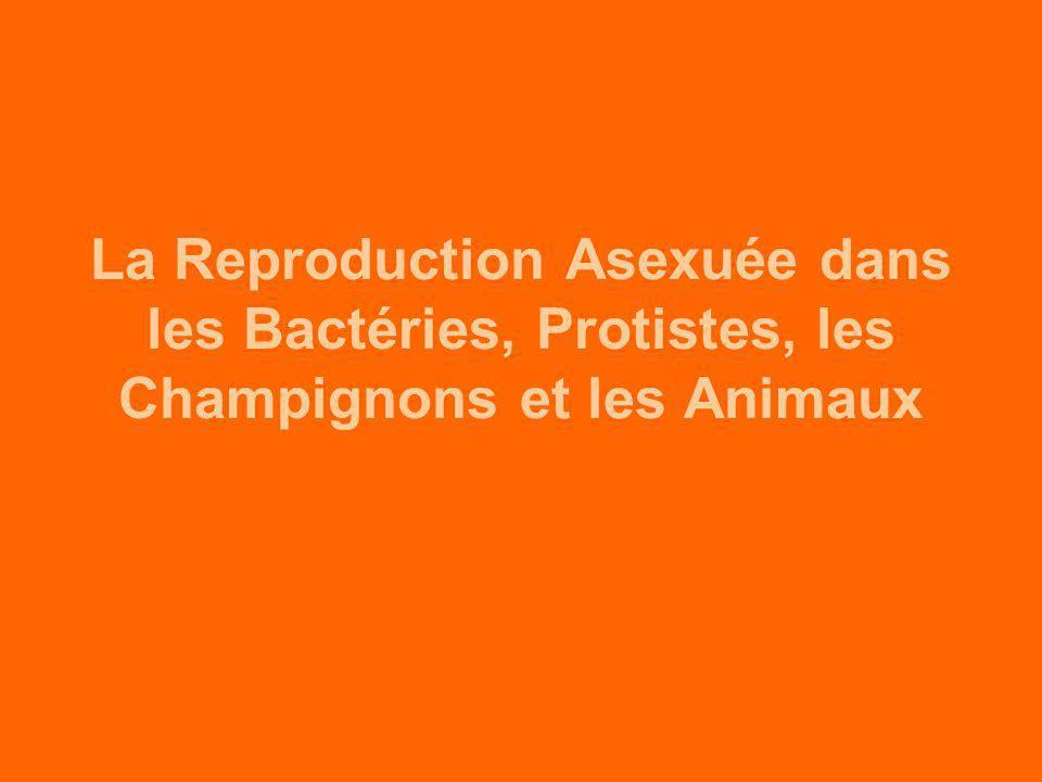 La Reproduction Asexuée dans les Bactéries, Protistes, les Champignons et les Animaux