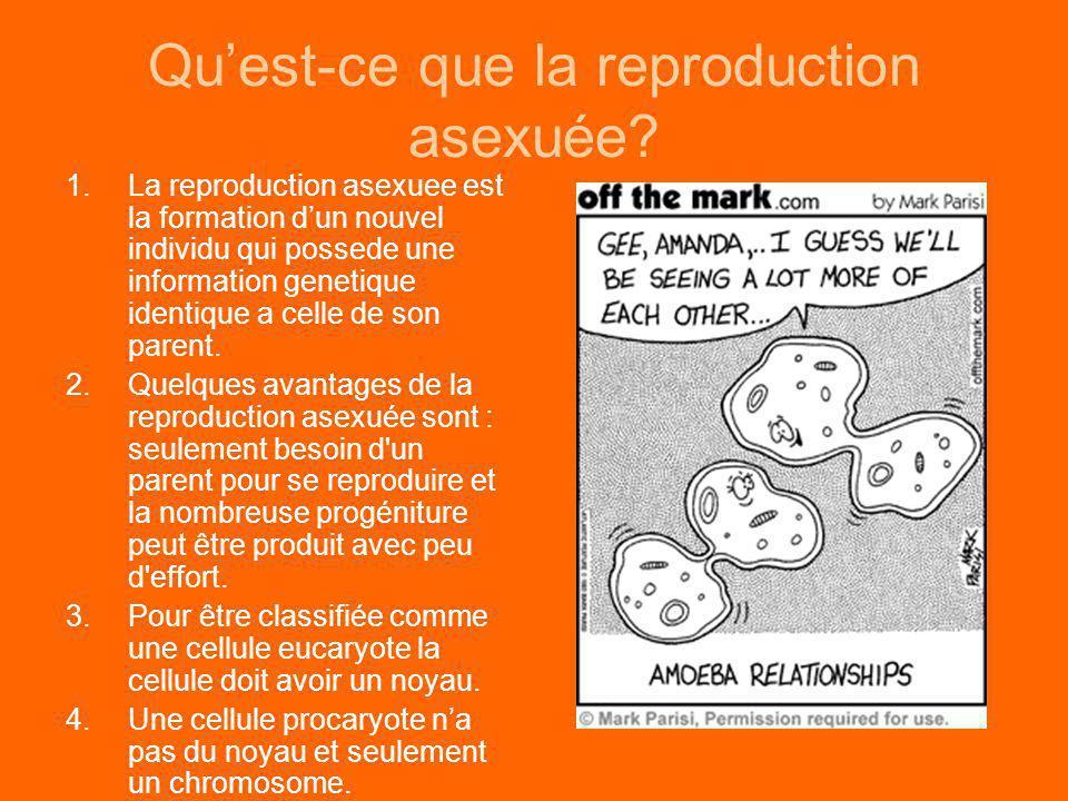 Quest-ce que la reproduction asexuée? 1.La reproduction asexuee est la formation dun nouvel individu qui possede une information genetique identique a